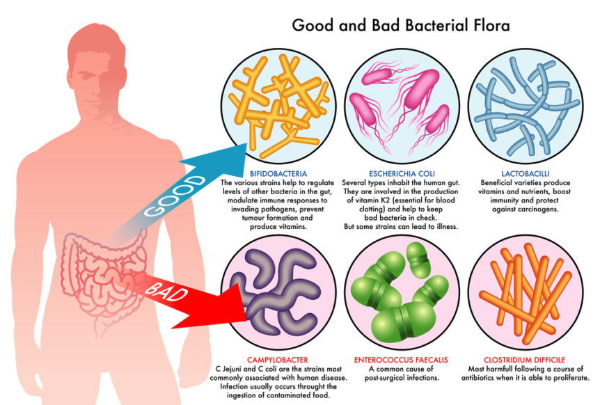 gut_bacteria-862x582.jpg
